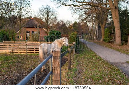 Curious white pony standing near a fence.
