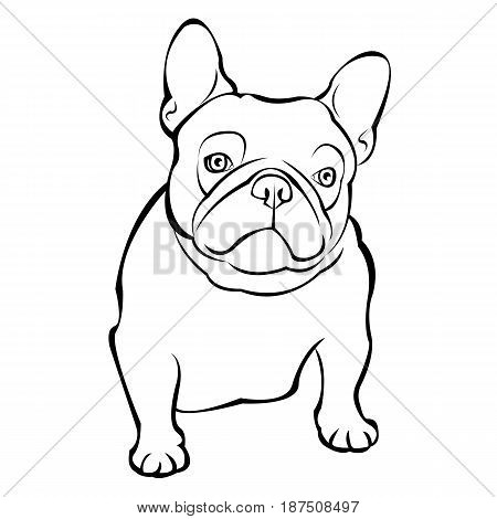 French bulldog background. Vector illustration. Dog illustration french