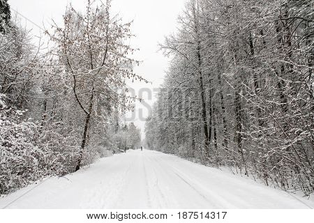 Winter road in a wooded area, the European part of Russia