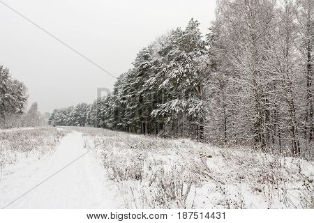 Winter snowy landscape in the middle zone of Russia