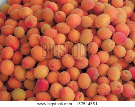 The harvest of apricots. Fruits and berries in the garden.