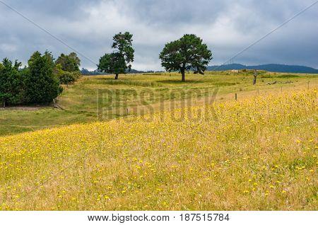 Beautiful Summer Landscape Of Sunlit Meadow