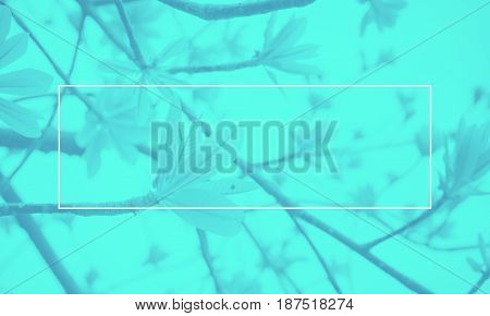 Empty white frame on blue Duotone of leaf on tree background Mock up for adding your text.