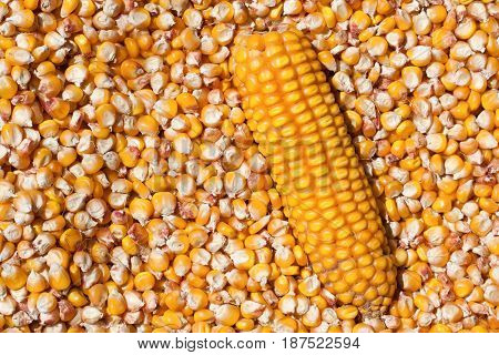 Dried corn with a head as a background. Top view.