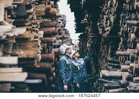 wood worker storage checking tree resource lumber