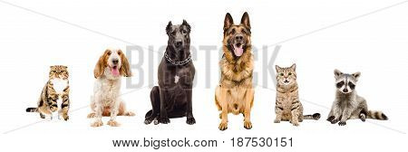 Group of animals, sitting together, isolated on a white background