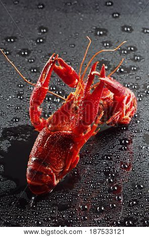 Red crawfish with water drops on black background