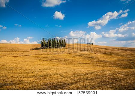 Scenic Tuscany Landscape With Cypress Trees, Val D'orcia Valley, Italy