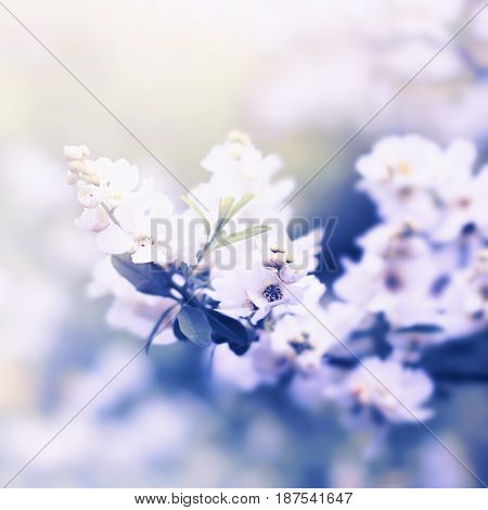 White Flowers On The Tree