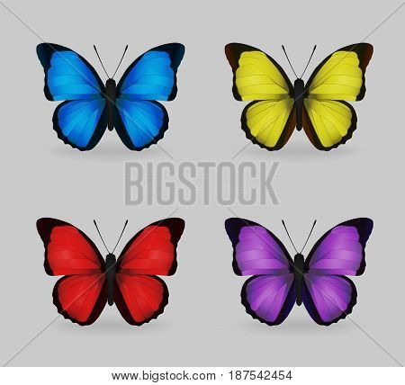 A collection of vibrant multy color insect blue morpho butterflies. Realistic close-up look delicate wing pattern 4 colour variations.