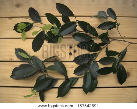 Bay leaves and branches on the wooden background, seasoning, flavoring