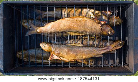 Smoked Baikal grayling (Thymallus baicalensis) in the smoke box