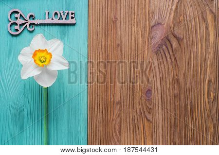One white daffodil and wooden decor in the form of a key with a word love. Template of greeting card invitation. The flower on a wooden background of two colors is brown and turquoise.