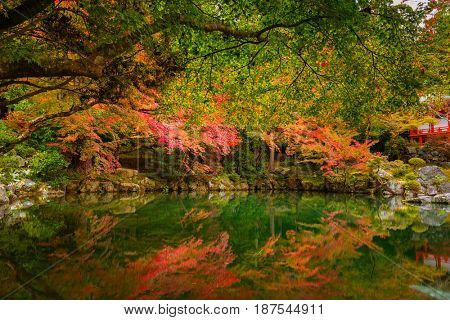 Beautiful autumn in japanese garden with colorful maple trees, Kyoto, Japan