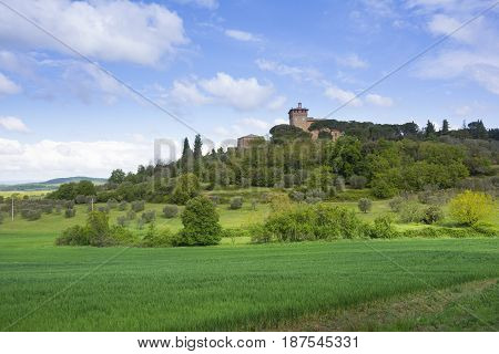 classic Tuscany landscape with hillscipress and field during a sunny day.