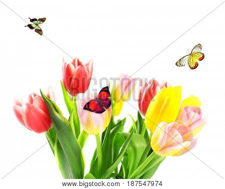 Beautiful flowers and flying butterflies on white background