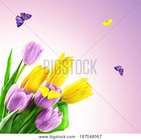 Beautiful flowers and flying butterflies on color background