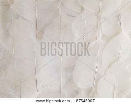 Background fine white transparent leaves with tree forest texture