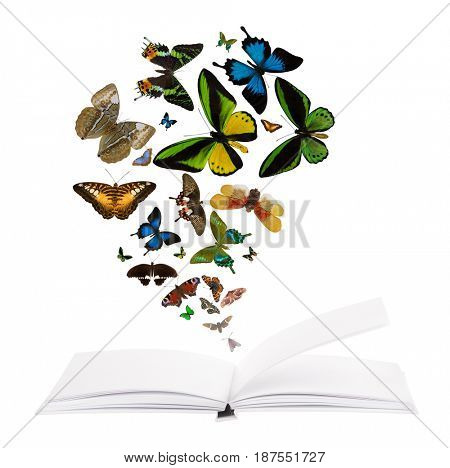 open blank book and flying butterflies isolated on white background