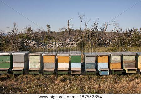 Honey bee hives on the island Solta in croatia