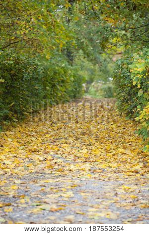Walk along the paths of the autumn park, golden foliage on the path. Golden autumn background