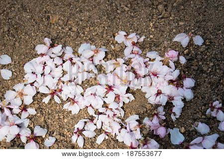 Petals on the floor useful as a background.