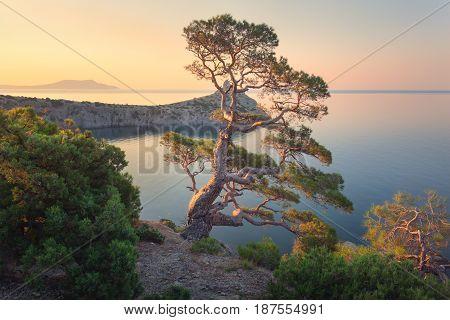 Amazing Tree On The Mountain At Sunrise