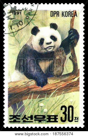 STAVROPOL RUSSIA - May 14 2017: A Stamp sheet printed in North Korea shows Panda on the tree series Pandas circa 1991