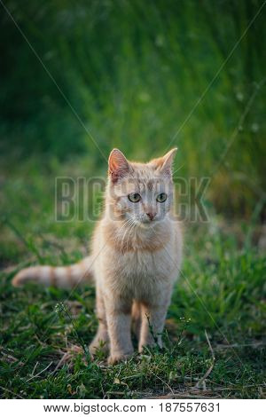 Cute cat in garden