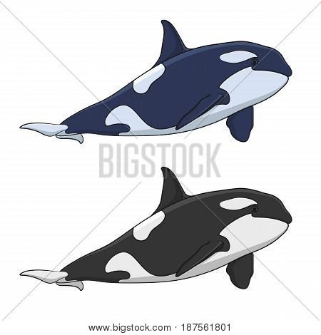Color image of a killer whale. Isolated vector objects on white background.