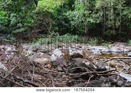 Thai dark tropical forest and rapid mountain river in Mu Koh Chang National Park, Chang island, Thailand. Path to the Khlong Phlu waterfall is littered with dry branches. Natural background.