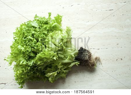 Bunch Of Raw Organic Green Frisee Salad With Roots