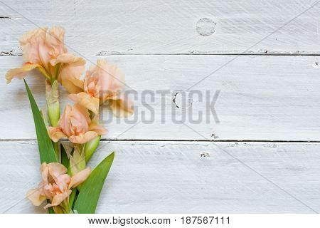tender iris flowers over white wooden table. top view with copy space. mock up