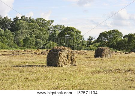 A field with cut grass. Haystacks on a background of green trees and blue sky with clouds
