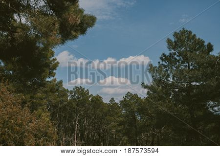 Mountain landscape. High mountain view. Pine trees at summertime. Summer in the forest.