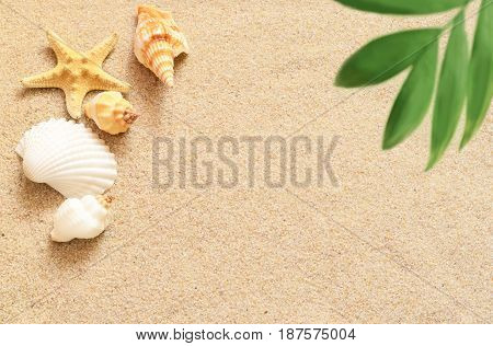 Sea shells starfish and palm on the sand background. Summer beach