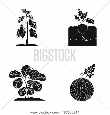 Radish, strawberry, watermelon, eggplant.Plant set collection icons in black style vector symbol stock illustration .