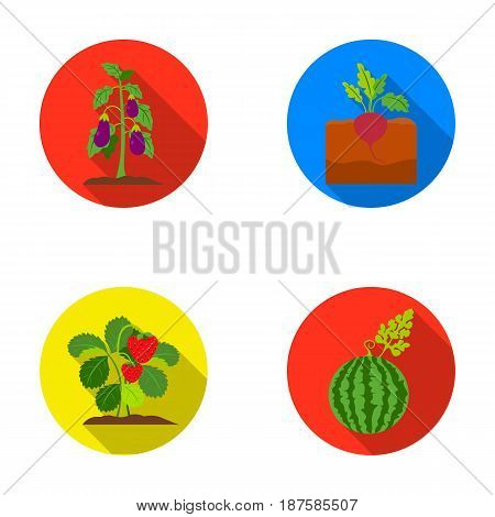 Radish, strawberry, watermelon, eggplant.Plant set collection icons in flat style vector symbol stock illustration .