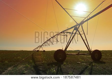 wheat field irrigated with a center pivot sprinkler system