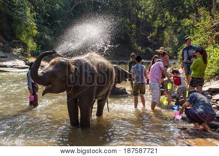 Chiang Mai - February 3, 2017: Baby elephant bathing in river near Chiang Mai, Thailand