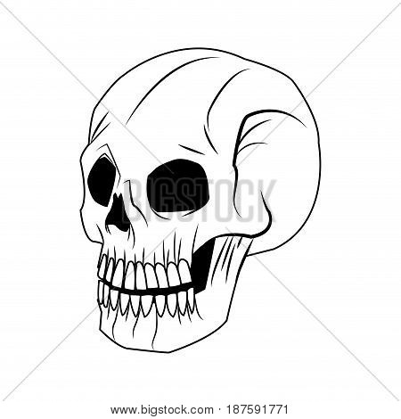 skeleton of the human head, vintage bone vector illustration
