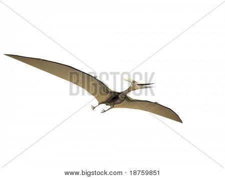 Pterodactyl or Pteranodon dinosaur isolated on white