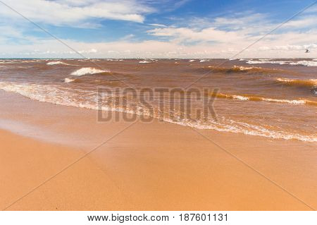 Windy Holiday Shore Landscape