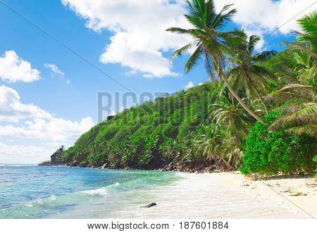 Summertime Panorama Palms