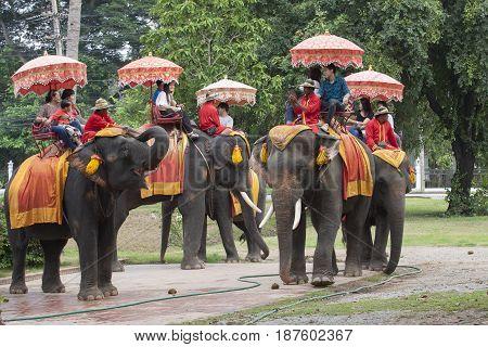 AYUTHAYA THAILAND - NOVEMBER 6 : asian tourist on elephant back at ayuthaya world heritage site of unesco most popular traveling destination on november 6 2014 in ayuthaya province thailand