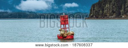 Alaska nature wildlife sea lions banner landscape cruise travel. Stellar seals on buoy in Juneau sleeping in Auke bay.