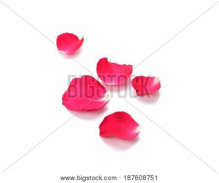 Red rose petals isolate on white background