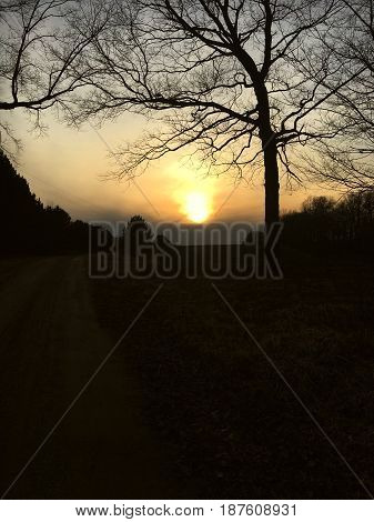 Tree with a sunset in the background to form a silhouette