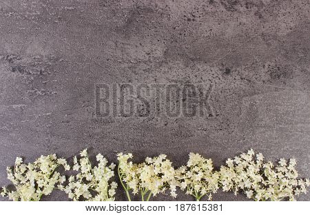 Elderberry Flowers On Structure Of Concrete, Copy Space For Text