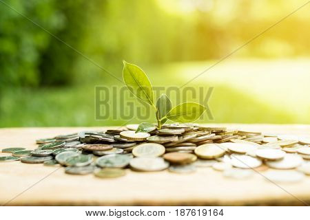 Young plant growing from heap of money (coins) - savings and investment concept
